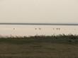 Озеро Медвежье - Курганская область, Петуховский район - 007