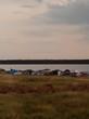 База отдыха Медвежий остров (Озеро Медвежье, Курганская область) - 005