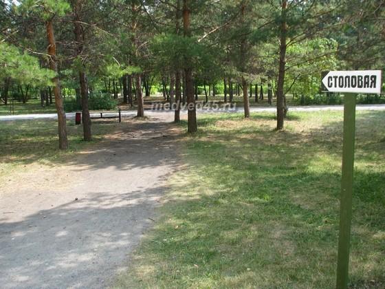 Санаторий «Озеро Медвежье» - 010 - Путь к столовой пролегает по парку с соснами
