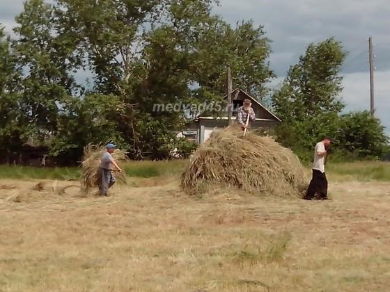Село Новое Ильинское (Курганская область) - 004 - Летняя заготовка сена