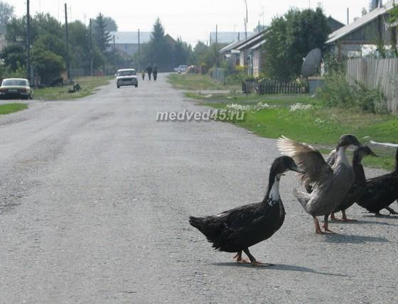 Поселок Курорт Озеро Медвежье (Курганская область) - 003 - Жизнь поселковой улицы