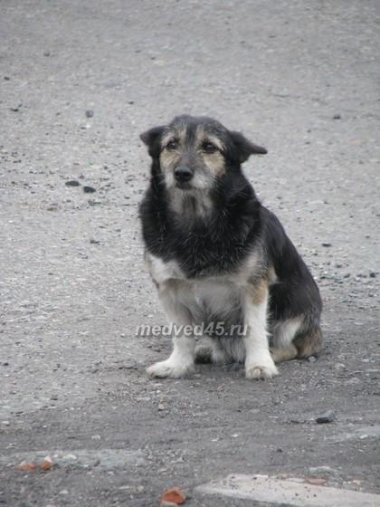 Поселок Курорт Озеро Медвежье (Курганская область) - 011 - Один из добродушных жителей посёлка