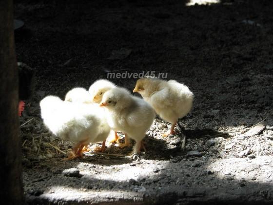 Поселок Курорт Озеро Медвежье (Курганская область) - 013 - Младшие обитатели посёлка