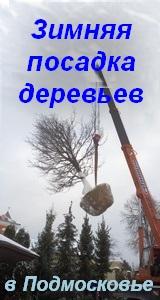 Зимняя посадка крупномеров (в Москве, Подмосковье)