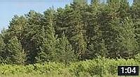 Видео о Медвежьем озере 001: Памятник природы Вишнево-Островная Дача (Курганская область, Петуховский район) - medved45.ru