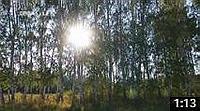 Видео о Медвежьем озере 503: Озеро Медвежье и Вишнево-Островная Дача (Курганская область, Петуховский район) - medved45.ru